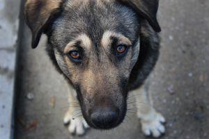 dog-1123262