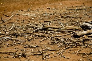 dead_drought_tree